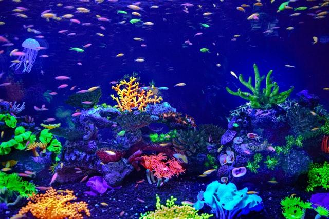 Doe het licht aan in de vissenkom